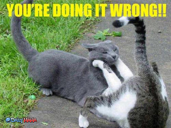 doing_it_wrong_cats